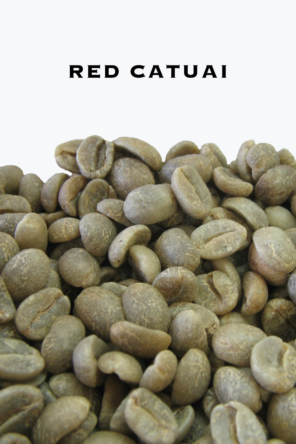 Red Catuai Green Coffee